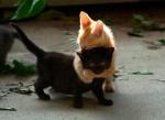 Dikke vriendschap