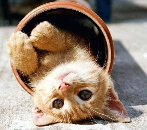 Hallo! Good morning